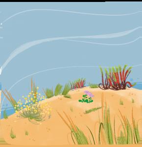 Flore des dunes
